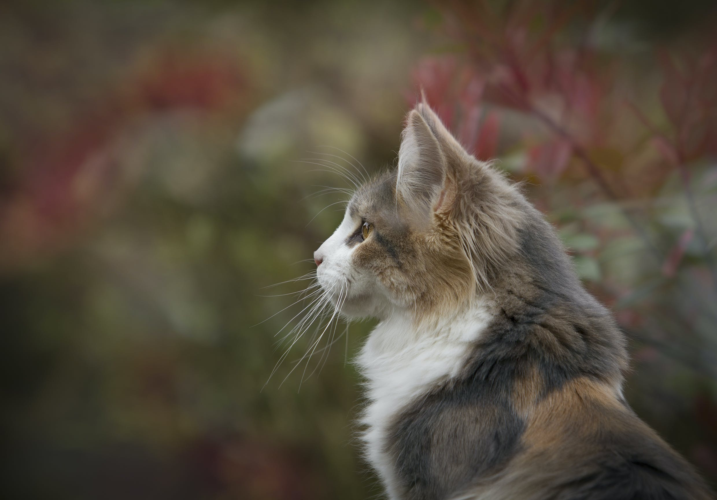 Close Up Photo of White and Brown Feline