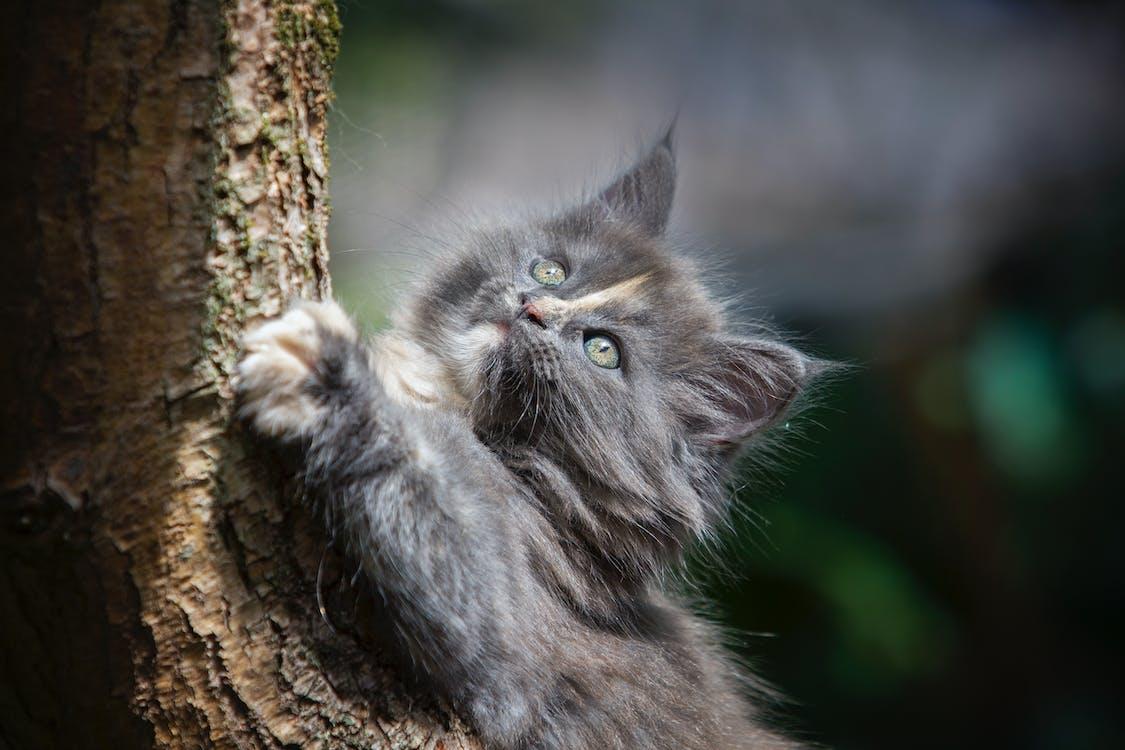 ağaç, ağaç kabuğu, bakmak