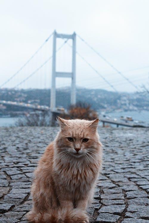 Orange Tabby Cat on Concrete Pavement