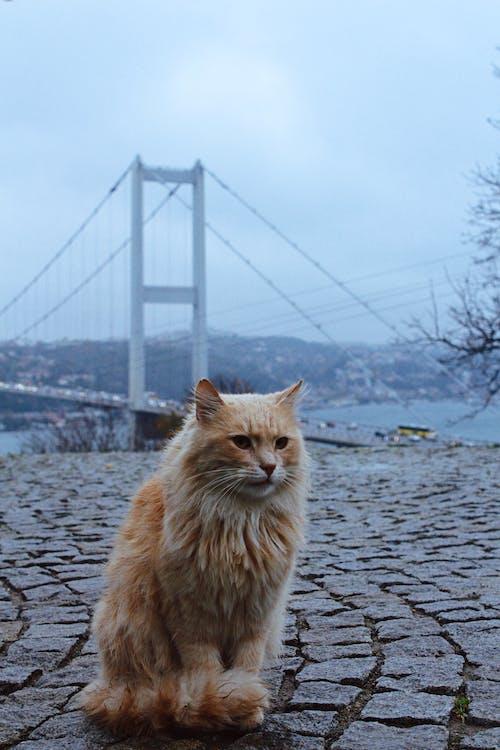 Orange Tabby Cat on Gray Concrete Pavement