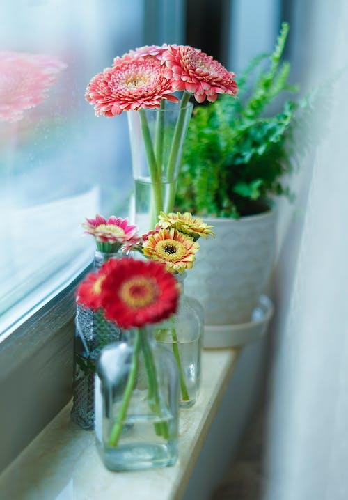 Základová fotografie zdarma na téma dekorace, elegantní, flóra