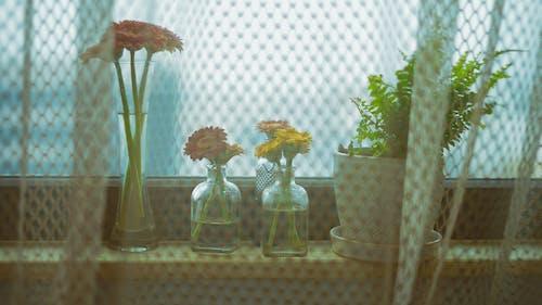 Základová fotografie zdarma na téma gerbera, kapradina, květiny