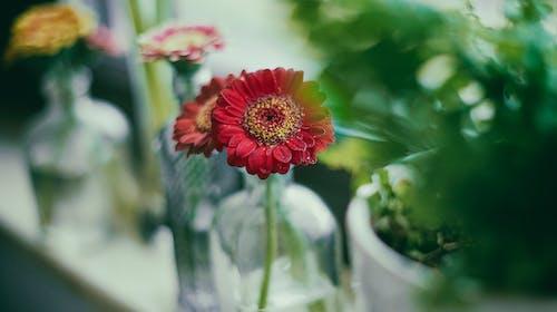 Základová fotografie zdarma na téma barva, červená, flóra