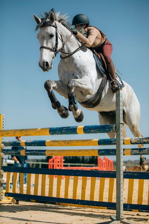 Free stock photo of action energy, career, cavalry