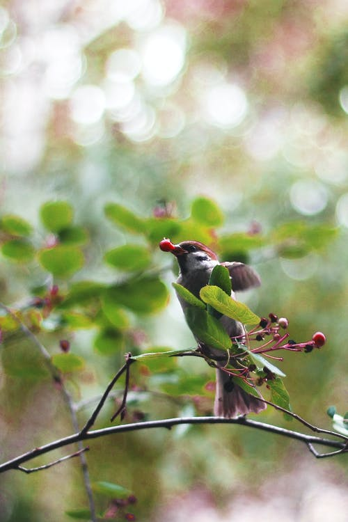 açık hava, ağaç, ahşap içeren Ücretsiz stok fotoğraf