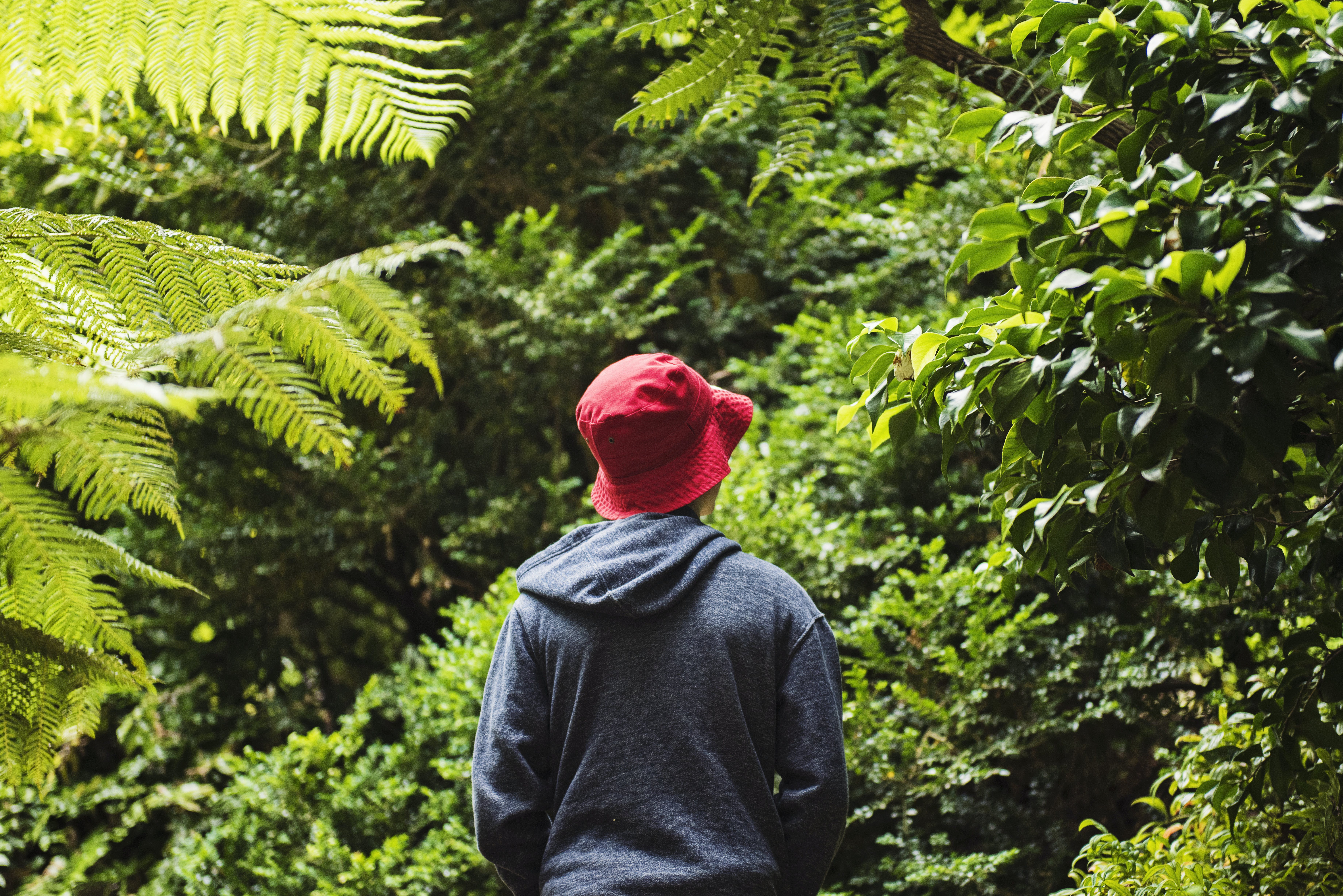 Free stock photo of alone, depression, garden, hat