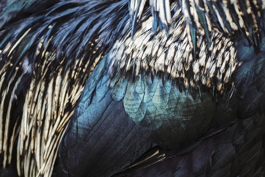 Close-up Photo of Feathers