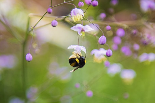 Close-up Photography of Honeybee