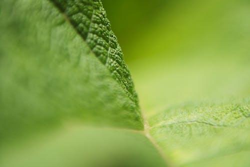 Free stock photo of green, macro