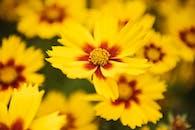 黃色花的宏觀攝影