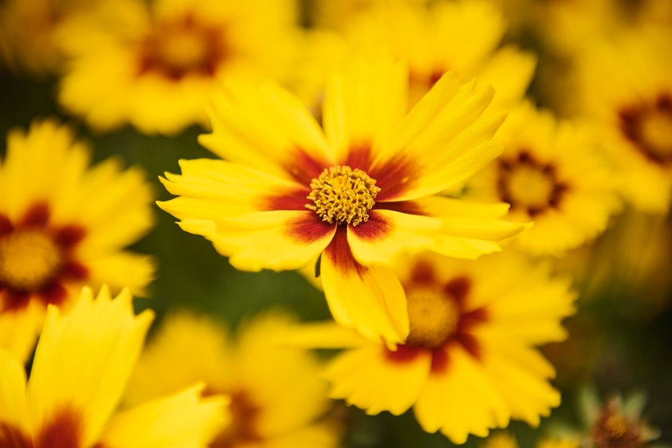 Macro Photography of Yellow Flowers