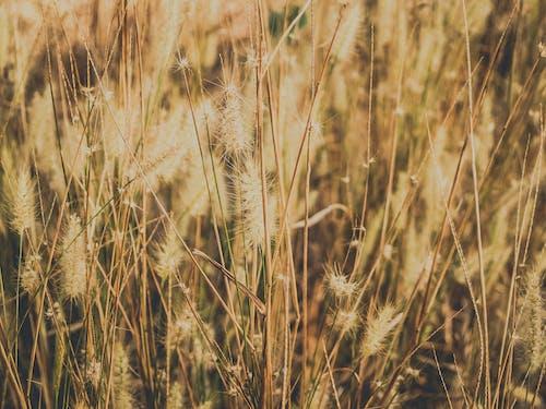 Dried Grass Field