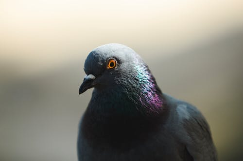 A Bird in Close Up Photography