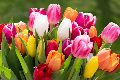 Immagine gratuita di avvicinamento, bocciolo, composizione floreale