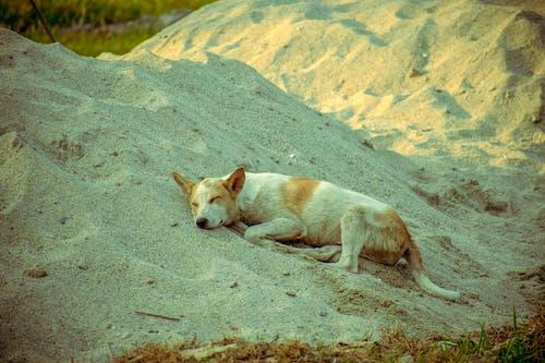 Ingyenes stockfotó állat, állatfotók, alvás témában