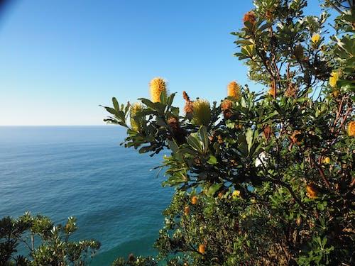 地平線, 拜伦湾, 洗瓶刷花 的 免费素材图片