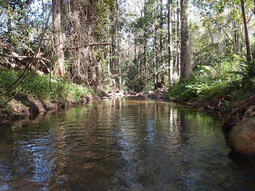 森林, 水 的 免费素材图片