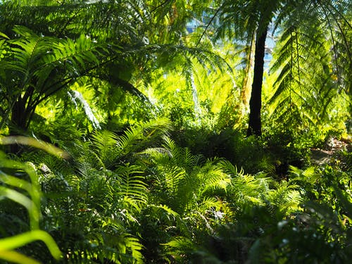 綠葉, 花園, 蕨树 的 免费素材图片