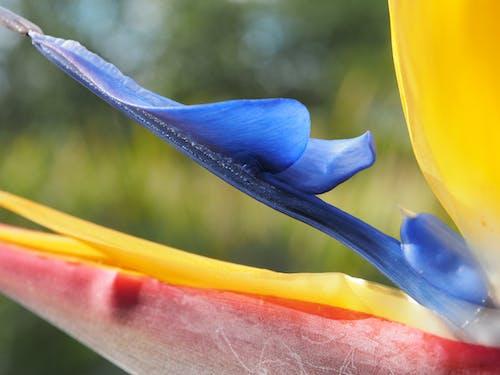 极乐鸟, 花, 鶴望蘭 的 免费素材图片