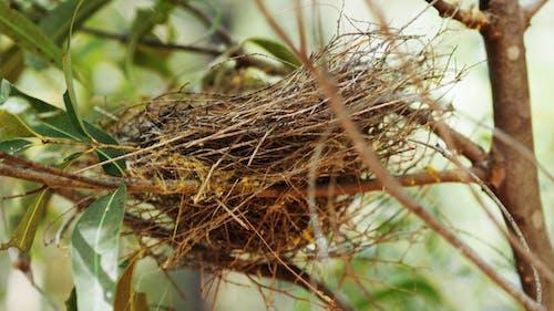 巢, 鳥巢, 鳥窩 的 免费素材图片