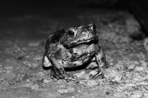 Ilmainen kuvapankkikuva tunnisteilla musta, sammakko, valkoinen, yö