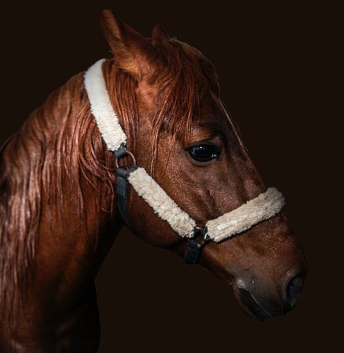 Free stock photo of animal lover, animallovers, animalrights