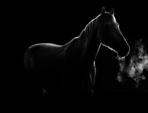Free stock photo of animal eye, animal farming, animal portrait