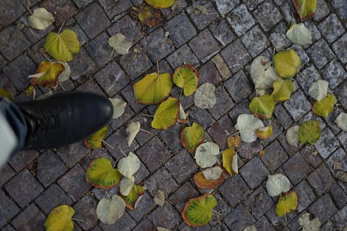 Top view of crop unrecognizable person strolling on paved walkway with green faded leaves in autumn time on street of city
