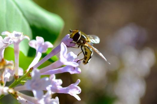 Free stock photo of 花, 植物, 蜜蜂, 动物
