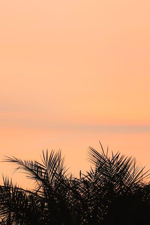 Verdant fragile leaves of tropical green plants near ocean under orange tranquil sunset