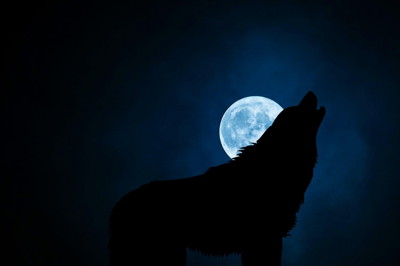 Free stock photo of animal, avatar, bark, barking