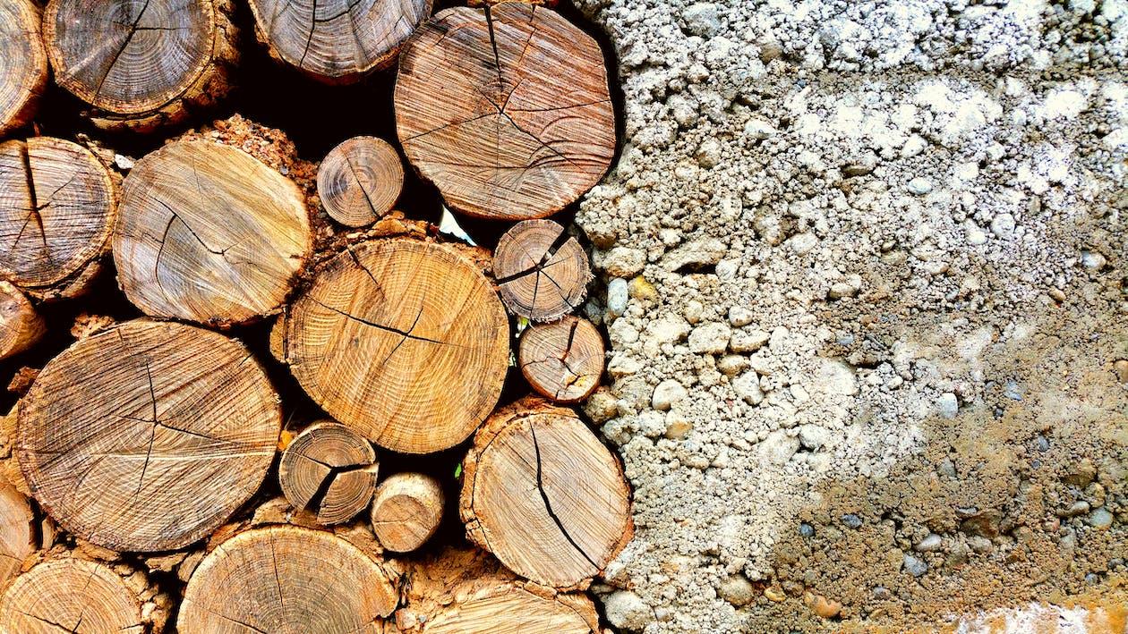 batang, batang kayu, batang pohon