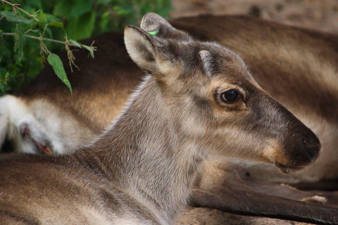 animal, becerro, fauna