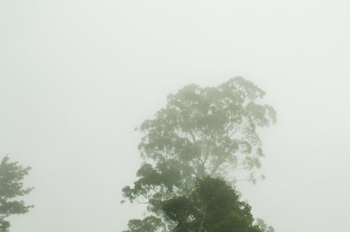 Free stock photo of clouds, day, fog