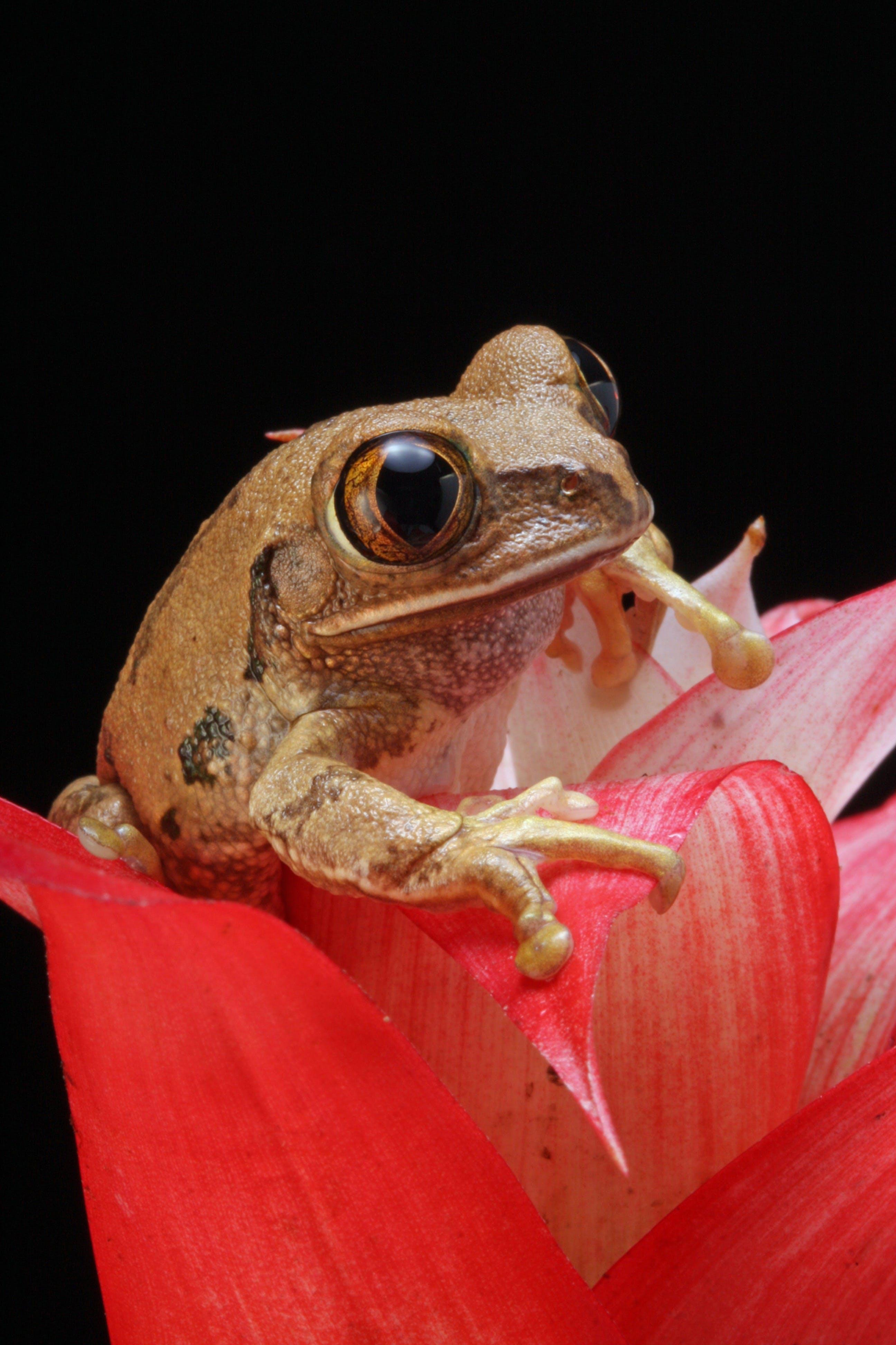 frog-marbled-reed-frog-amphibian-animal-73798.jpeg?auto=compress&cs=tinysrgb&dpr=2&h=200&w=600