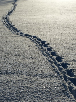 Free stock photo of snow, winter, white, footprints