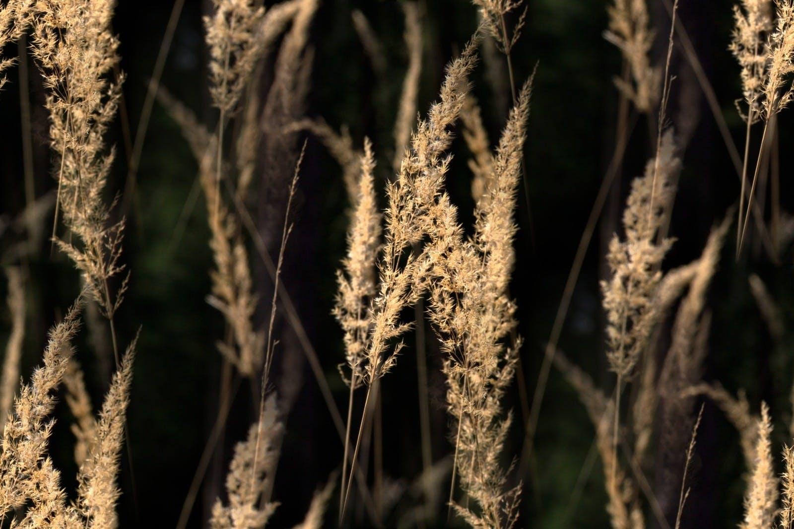 Brown Outdoor Plants
