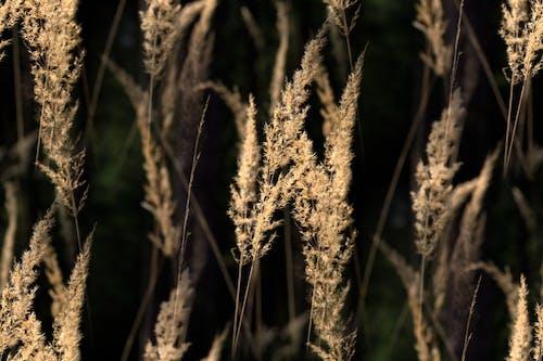 Gratis lagerfoto af close-up, græs, kraftværker, makro
