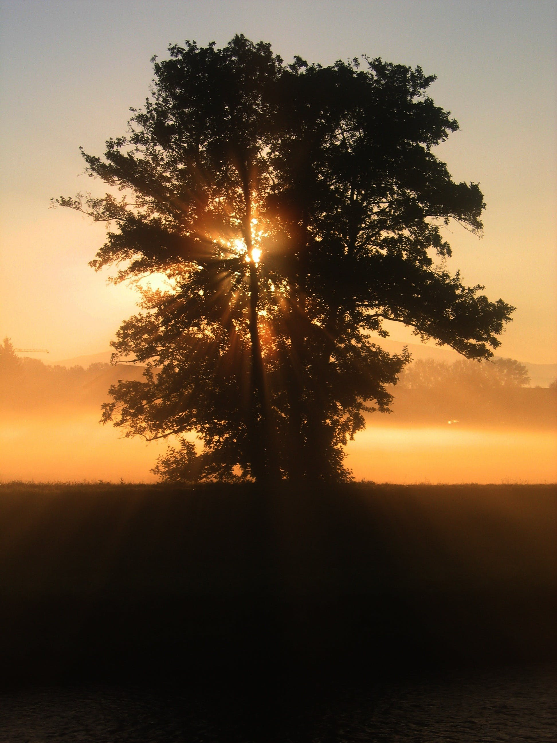 Green Tree over the Sunset