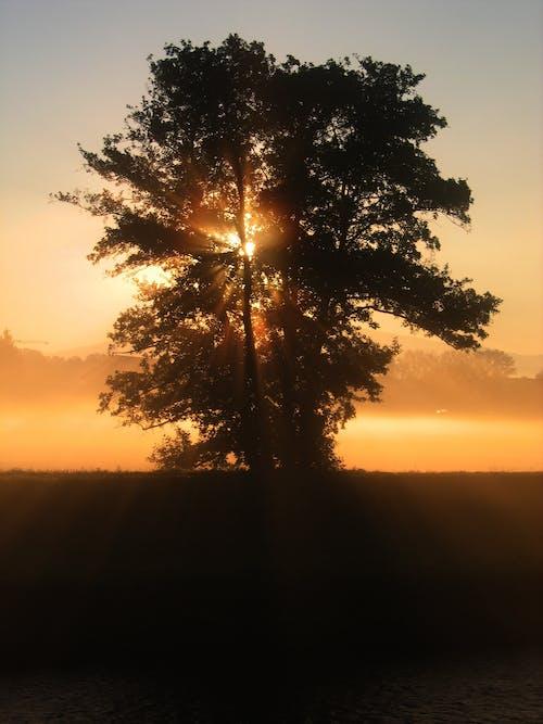 Foto d'estoc gratuïta de arbre, capvespre, cel, natura
