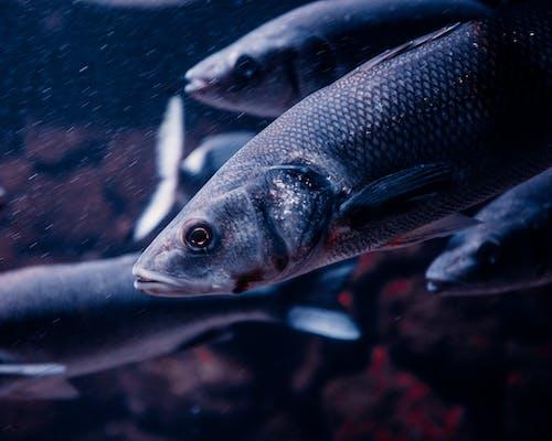 Macro Shot of Fishes Swimming Underwater