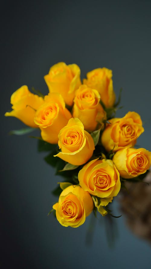 Vivid blossoming roses with bright yellow petals against gray wall in floristry store