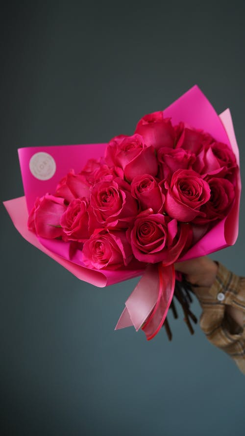 Crop anonymous person demonstrating fragrant bouquet of bright pink roses against gray background