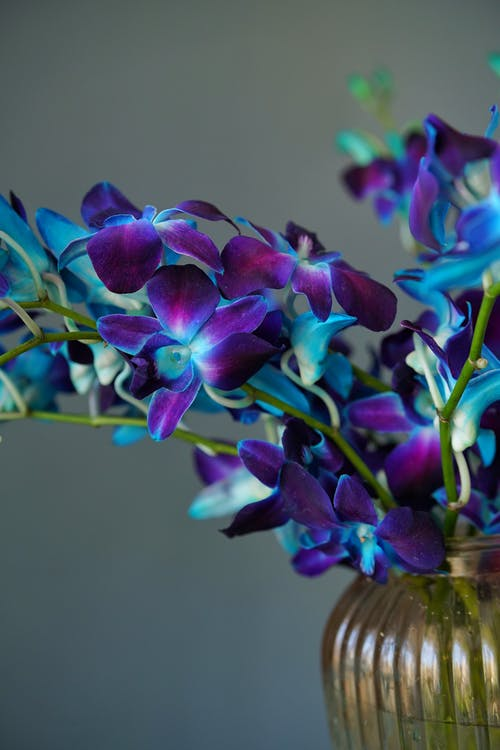 Vivid purple orchid in glass vase