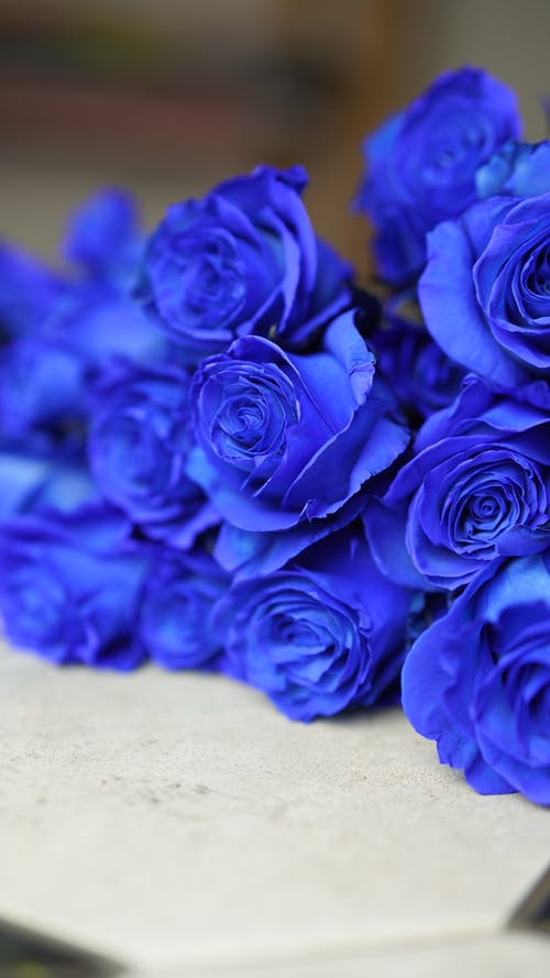 Bright blue roses on light table