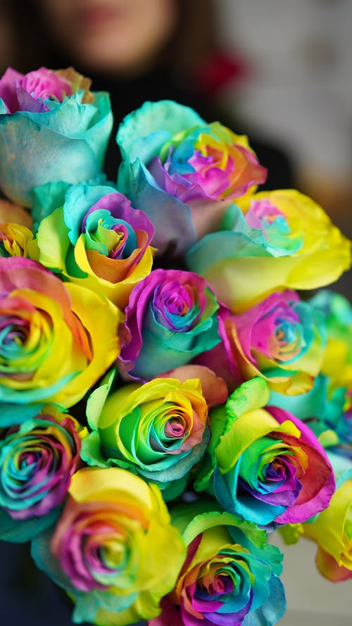 Crop unrecognizable person with bouquet of rainbow roses with delicate bright petals in light room on blurred background during blooming season