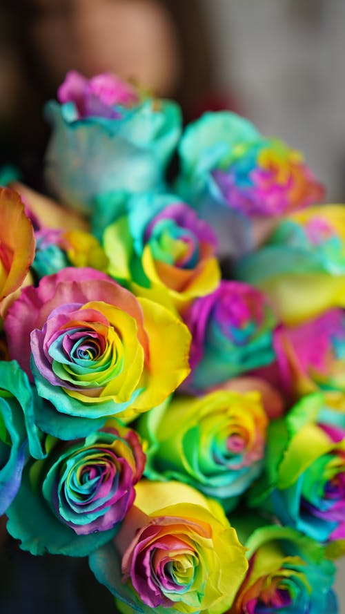 Bouquet of rainbow roses in room