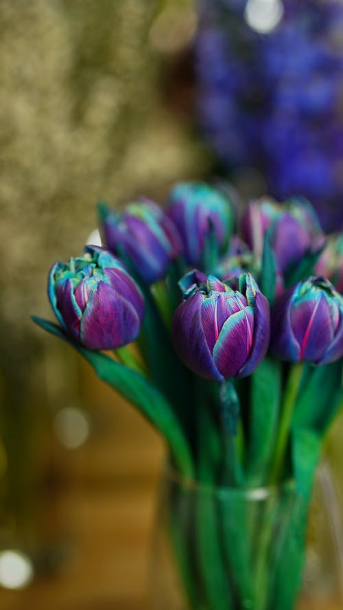 Bunch of blooming fragrant tulips with purple petals and green stems placed in glass vase in room on blurred background