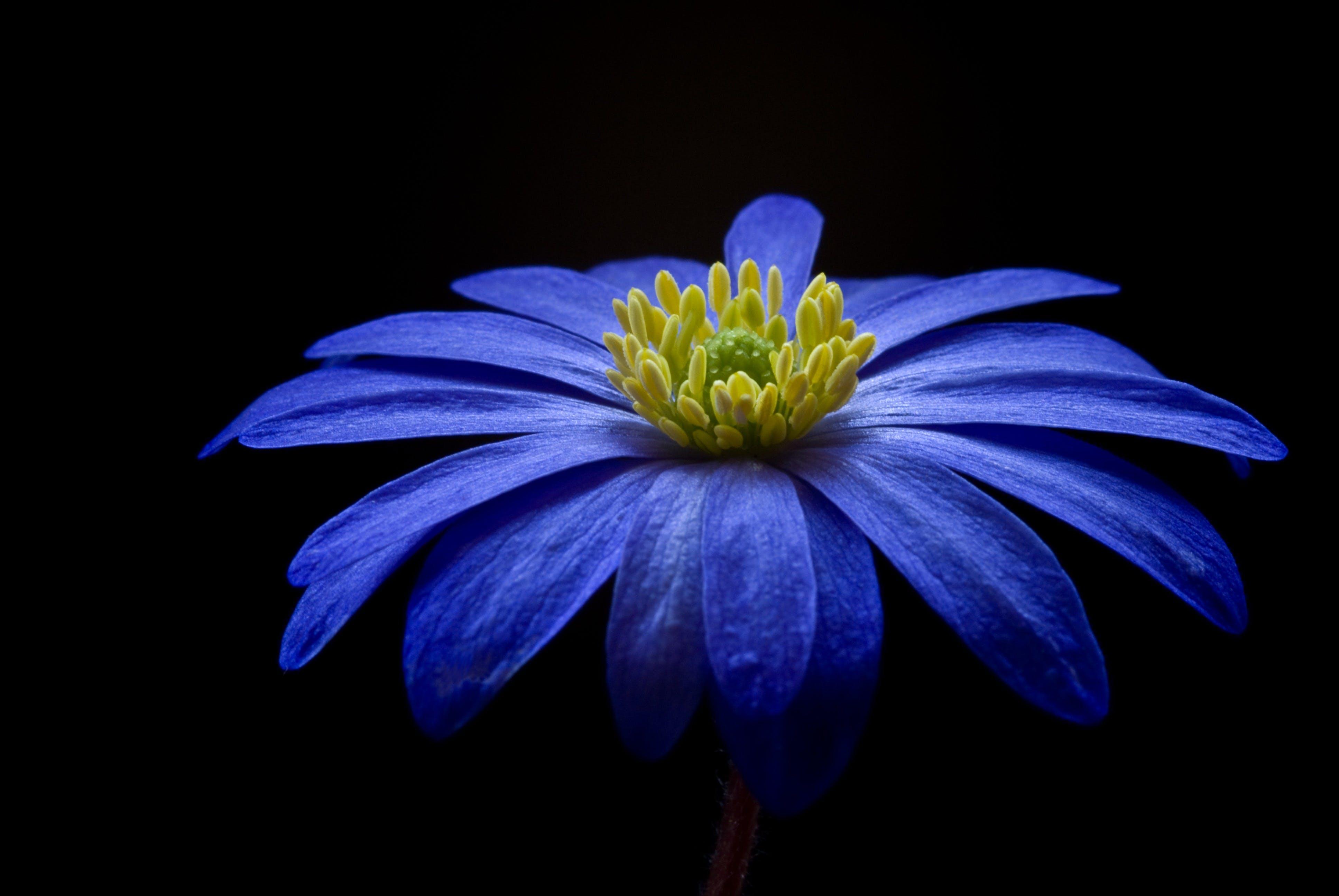 Blue Yellow Petaled Flower