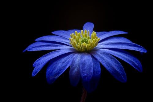 蓝黄色花瓣花